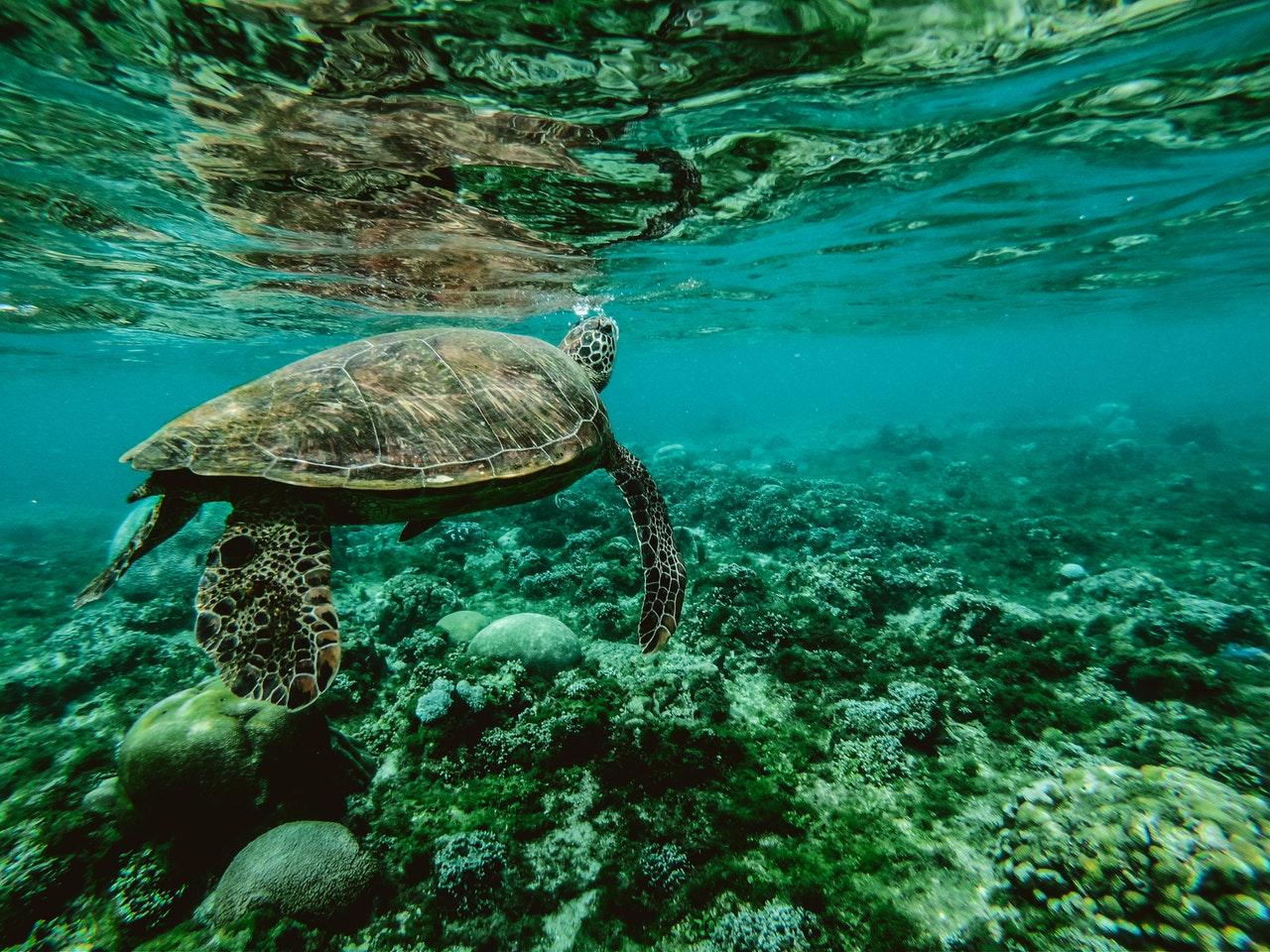 10 najpopularniejszych atrakcji turystycznych na Filipinach